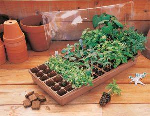Seed_Starting_Kit